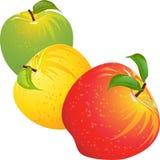 Conjunto del vector de manzanas coloridas Fotos de archivo
