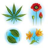 Conjunto del vector de plantas Fotografía de archivo libre de regalías