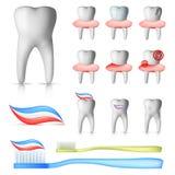 Conjunto dental Imágenes de archivo libres de regalías