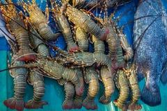 Conjunto do camarão Imagem de Stock Royalty Free