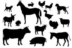 Conjunto doméstico de los animales Fotos de archivo