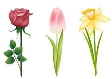 Conjunto floral. Imágenes de archivo libres de regalías