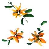 Conjunto floral Foto de archivo libre de regalías