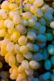Conjunto fresco das uvas na venda Foto de Stock