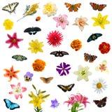 Conjunto grande de mariposas y de flores fotos de archivo libres de regalías