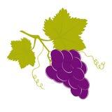 Conjunto preto da uva com duas folhas Ilustração Stock