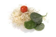 Conjunto sano - tomate, espinaca, alfalfa Fotografía de archivo