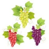 Conjunto três de uvas Fotografia de Stock Royalty Free