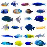 Conjunto tropical de los pescados Fotografía de archivo libre de regalías
