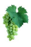 Conjunto verde da uva com folha foto de stock royalty free