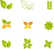 Conjunto verde de la hoja Fotografía de archivo