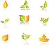 Conjunto verde de la hoja Imagen de archivo libre de regalías