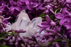 Conjuntos claros Himalaias de quartzo com as inclusões do hematita cercadas pela flor lilás roxa foto de stock royalty free