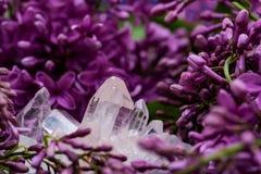 Conjuntos claros Himalaias de quartzo com as inclus?es do hematita cercadas pela flor lil?s roxa imagens de stock royalty free