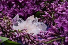 Conjuntos claros Himalaias de quartzo com as inclus?es do hematita cercadas pela flor lil?s roxa imagem de stock royalty free
