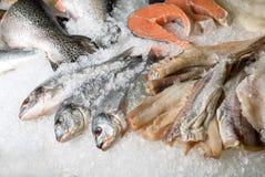 Conjuntos de los pescados imagen de archivo