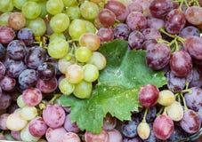 Conjuntos de uvas suculentos Fotografia de Stock Royalty Free