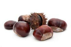 Conker. Horse-chestnut (latin - Aesculus hippocastanum), also known as Conker royalty free stock images