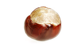 Conker. Closeup of a single isolated conker stock photos