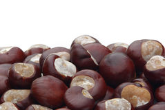 Conker Stock Images