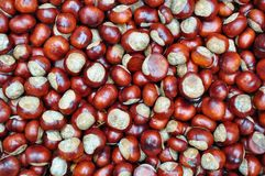 Conker background Royalty Free Stock Photos