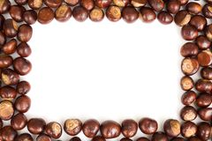 Conker border. Isolated on a white background stock photo