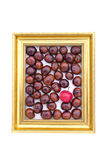 Conker fruits and red apple in in golden retro frame isolated on white Royalty Free Stock Photos