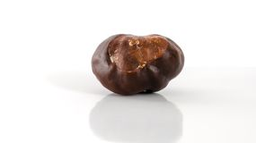 Conker. Horse-chestnut (Aesculus hippocastanum) on a white background stock photography