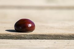 Conker from a horse-chestnut on a wooden table. Aesculus hippocastanum stock image