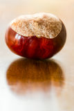 Conker. A single conker reflecting in a wooden surface royalty free stock photos