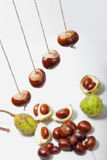Conker strings Stock Images