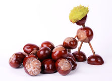 Conker worker Stock Image