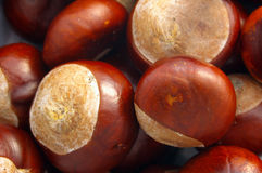 Conkers 01 Royalty Free Stock Images