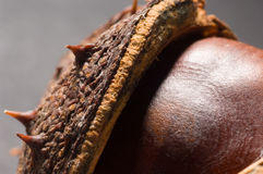 Conkers Royalty Free Stock Photography
