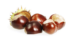 Conkers Stock Images