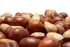 Conkers Royalty Free Stock Photos