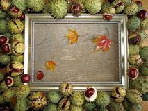 Conker frame royalty free stock photo
