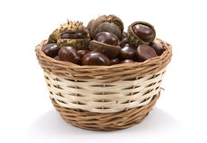 Conkers in basket. Chestnuts (Horse Chestnut - Aesculus hippocastanum) in wicker basket on white background Royalty Free Stock Photos