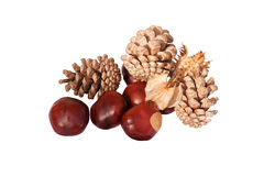 Conkers & cones Royalty Free Stock Image
