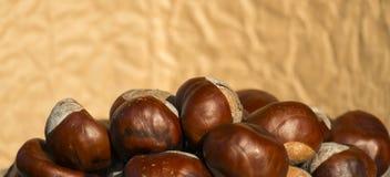 Conkers de uma castanha-da-índia fotos de stock