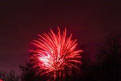 Conkers em Forest Fireworks nacional Foto de Stock
