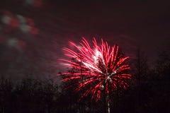 Conkers em Forest Fireworks nacional Imagem de Stock