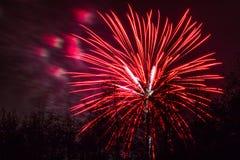 Conkers en Forest Fireworks nacional foto de archivo