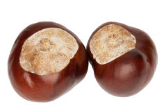 Conkers of a Horse Chestnut, isolated. Two glossy conkers of a Horse Chestnut, Aesculus hippocastanum, isolated against white background Stock Images