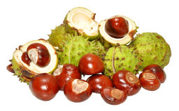 Conkers Stock Photo