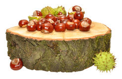 Conkers Royalty Free Stock Image