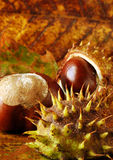 Conkers and leaves Royalty Free Stock Image