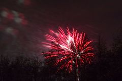 Conkers in Nationaal Forest Fireworks Stock Afbeelding