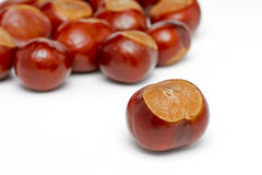 Conkers on white Stock Image