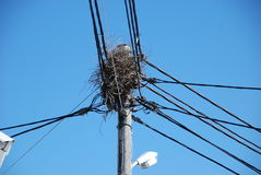 Connected bird nest Stock Image